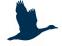 SeeBadSaarow Logo